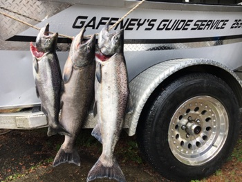 Kalama river springers - King salmon caught in the springtime