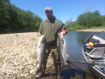 Spring Chinook salmon caught on the Kalama river